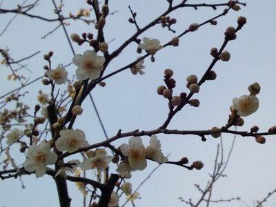 20130217 有栖川宮記念公園2.JPG