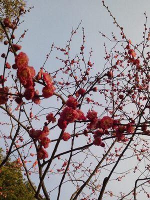 20130217 有栖川宮記念公園3.JPG