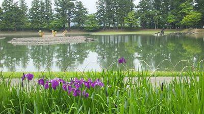 20130615 5毛越寺庭園@平泉5.JPG