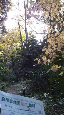 20131124 自然教育園1.JPG