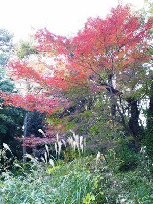 20131124 自然教育園11.JPG