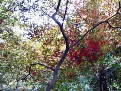 20131124 自然教育園14.JPG