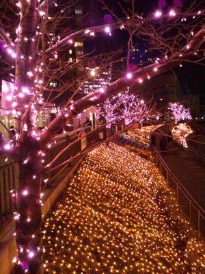 20131221 目黒川桜イルミ1.JPG