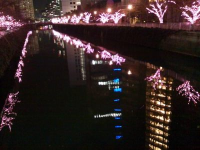 20131221 目黒川桜イルミ5.JPG