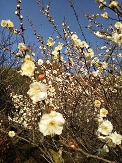 20140126 小石川植物園4.JPG