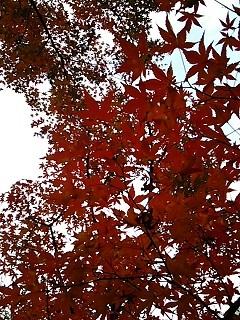 20141130 六本木ヒルズ毛利庭園3.JPG