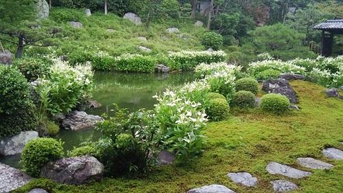 20150704 京都4建仁寺両足院2.JPG
