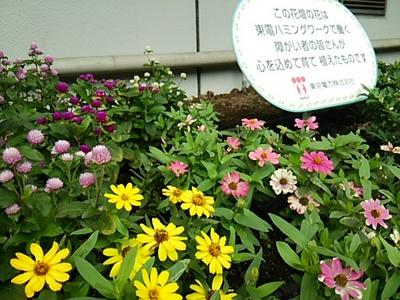20150926 東京電力花壇.JPG