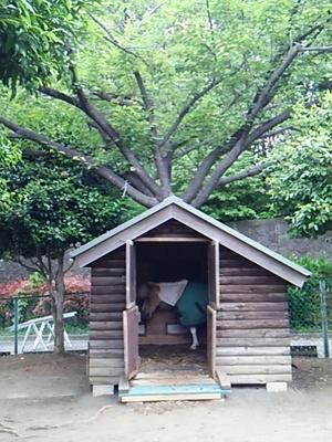 20160503 根岸森林公園11.JPG