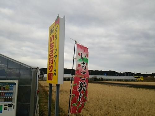 20170109 4イチゴ狩り4.JPG