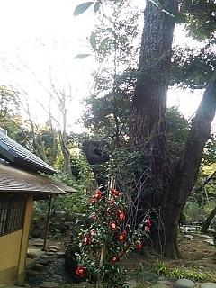 20170402 椿@都庭園美3.JPG