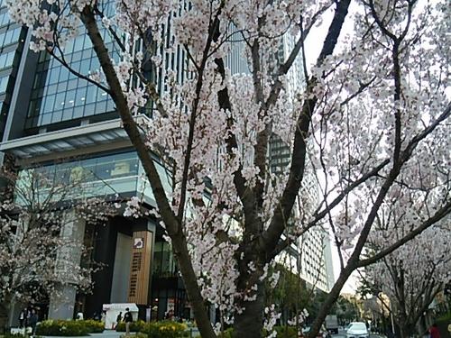 20170403 桜八分咲き@飯田橋1.JPG