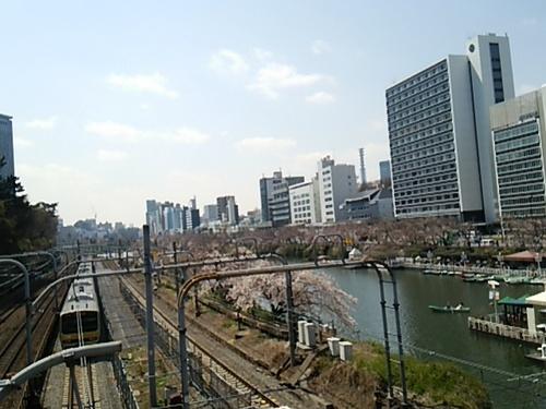 20170403 桜八分咲き@飯田橋2.JPG
