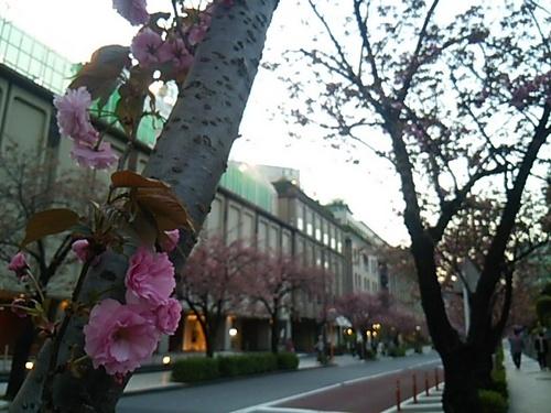20170415 東京ガーデンテラス紀尾井町.JPG