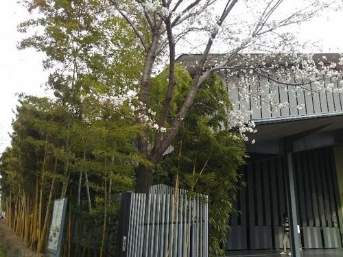 20180324 根津美術館の桜1.jpg