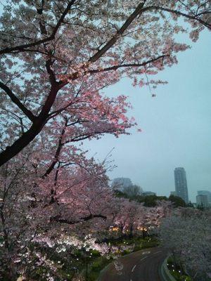 20130331 ミッドタウン桜.JPG