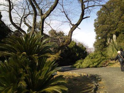 20140126 小石川植物園1.JPG