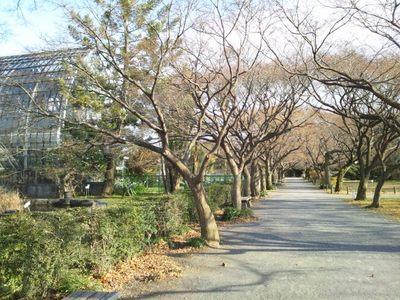 20140126 小石川植物園3.JPG