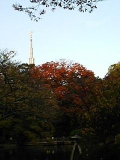 20141123 紅葉@有栖川宮記念公園2.JPG