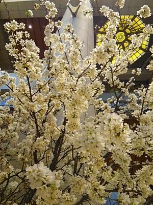 20150327 桜@日本橋三井タワー.JPG
