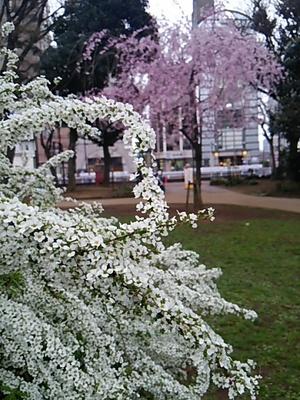 20150329 桜@白金台どんぐり児童遊園.JPG