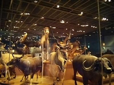 20150531 国立科学博物館3.JPG