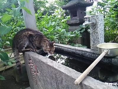 20150719 池上本門寺9.JPG