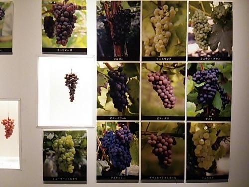 20160129 ワイン展2.JPG