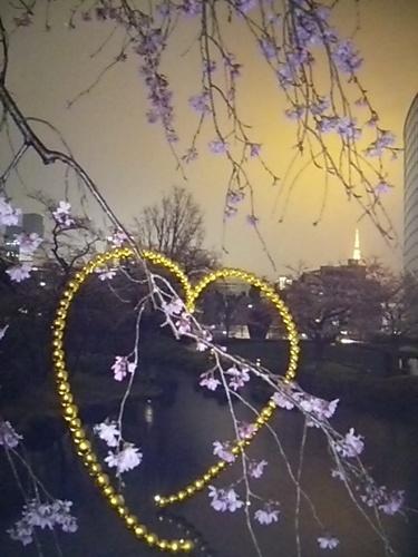 20170331 夜桜@六本木ヒルズ1.JPG