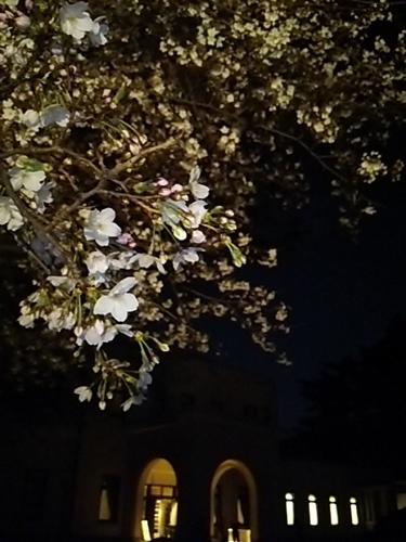 20170402 桜@都庭園美3.JPG