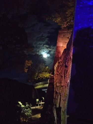 20171202 玉泉院丸庭園ライトアップ6.jpg