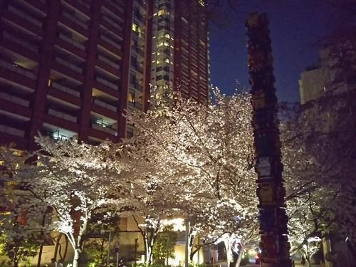 20180328 六本木ヒルズさくら公園の夜桜1.jpg