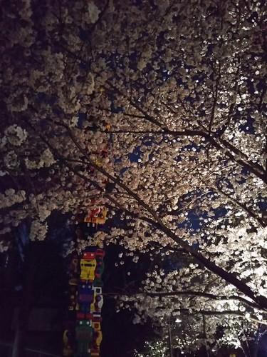 20180328 六本木ヒルズさくら公園の夜桜2.jpg