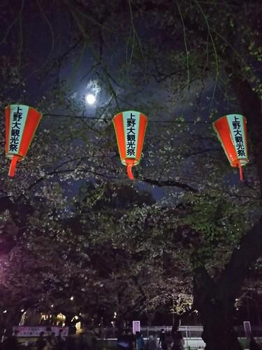 20180330 上野公園の夜桜3.jpg