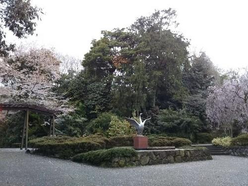 20180407 桜1白鳥路.jpg