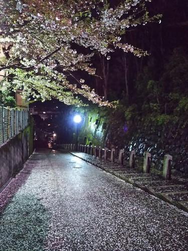 20180407 桜20八坂.jpg