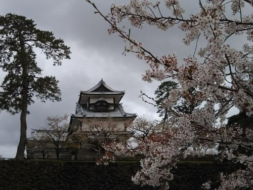 20180407 桜4菱櫓.jpg