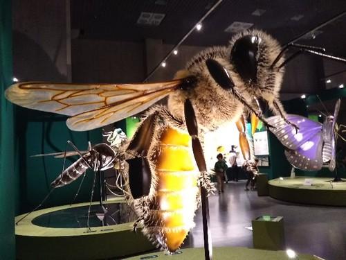 20180824 昆虫展1.jpg