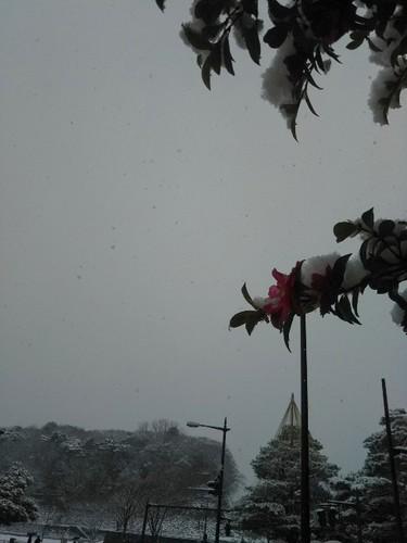 20190210 金沢雪景色5.jpg