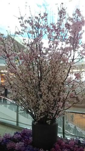 20190312 羽田空港第2ビル桜.jpg