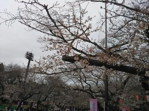 20190323 桜@上野公園2.jpg
