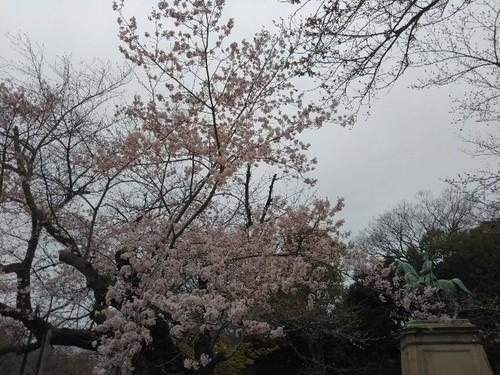 20190323 桜@上野公園3.jpg