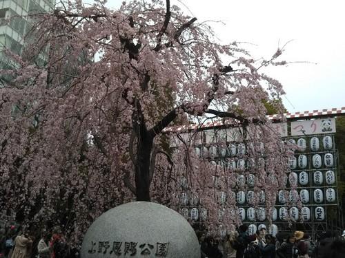 20190323 桜@上野公園5.jpg