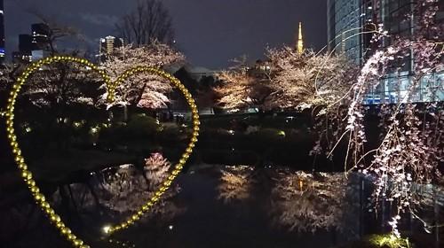 20190323 桜@六本木ヒルズ1.jpg