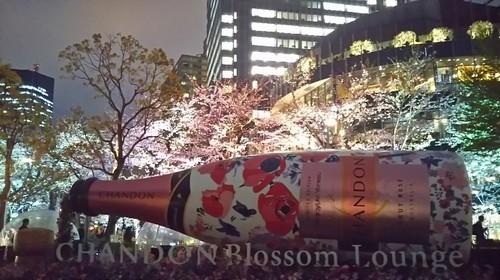 20190329 桜ライトアップ@東京ミッドタウン1.jpg