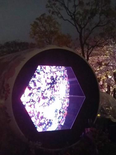 20190329 桜ライトアップ@東京ミッドタウン2.jpg