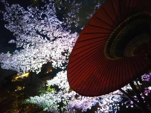 20190331 桜ライトアップ@八芳園4.jpg