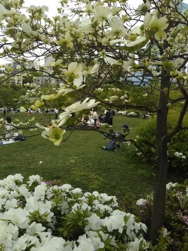 20190428 ミッドタウン檜町公園.jpg